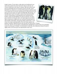 LaFeuilleMobile_pole-Nord_Pingouin-ou-manchot_3-5-04